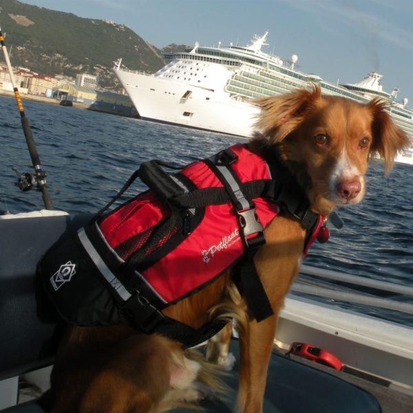 crewsaver petfloat sailing